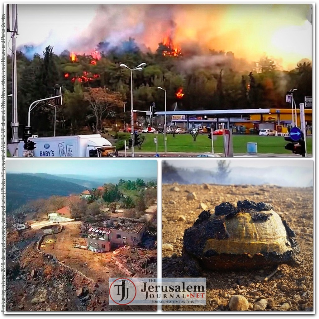 Fire in Israel and damage and wounded turtle Photos YouTube screenshot WEIRD OF channel YNet Video Israel Nature and Parks Service LOGO